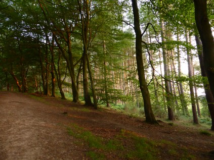 Castle Ring, Cannock Chase