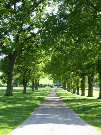 A fine avenue, Dunstall