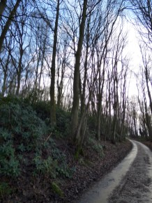 This is Rookery Wood, where I believe the ferreting scenes were filmed.
