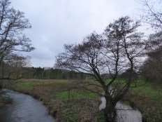 This is the Black Brook east of Home Farm. A true water meadow surrounds it.