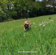 Kym Waterston-Green
