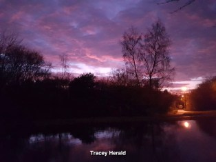 Tracey Herald