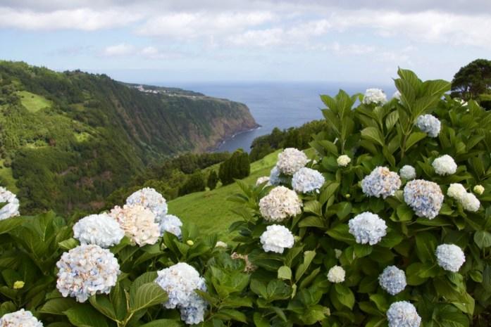Beautiful view and Hydrangeas