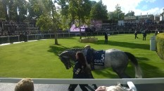 Librisa Breeze in the Parade Ring