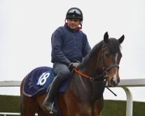 De Bruyne Horse