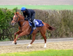 Sterling Silva on the gallops