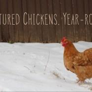 Pastured chickens, year-round