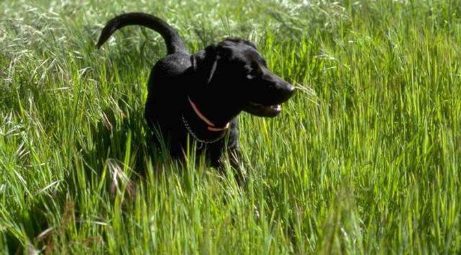 Dogs and Heatstroke