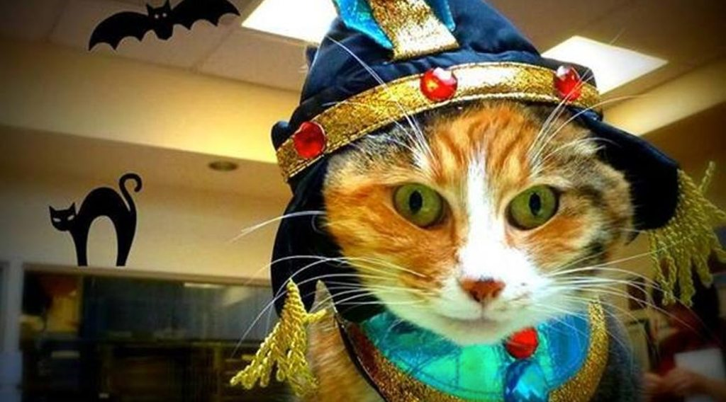 Cat dressed up in a Halloween costume