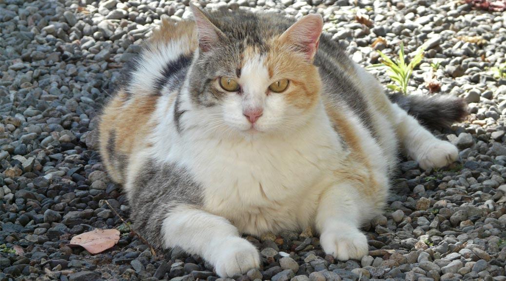 Large cat