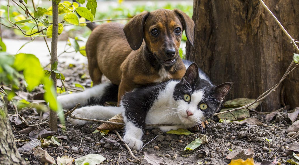 Dog and cat playing together beneath a tree