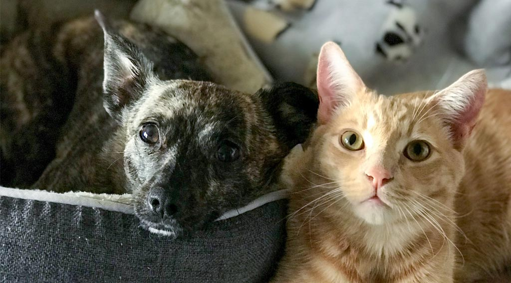 Dog and cat side by side