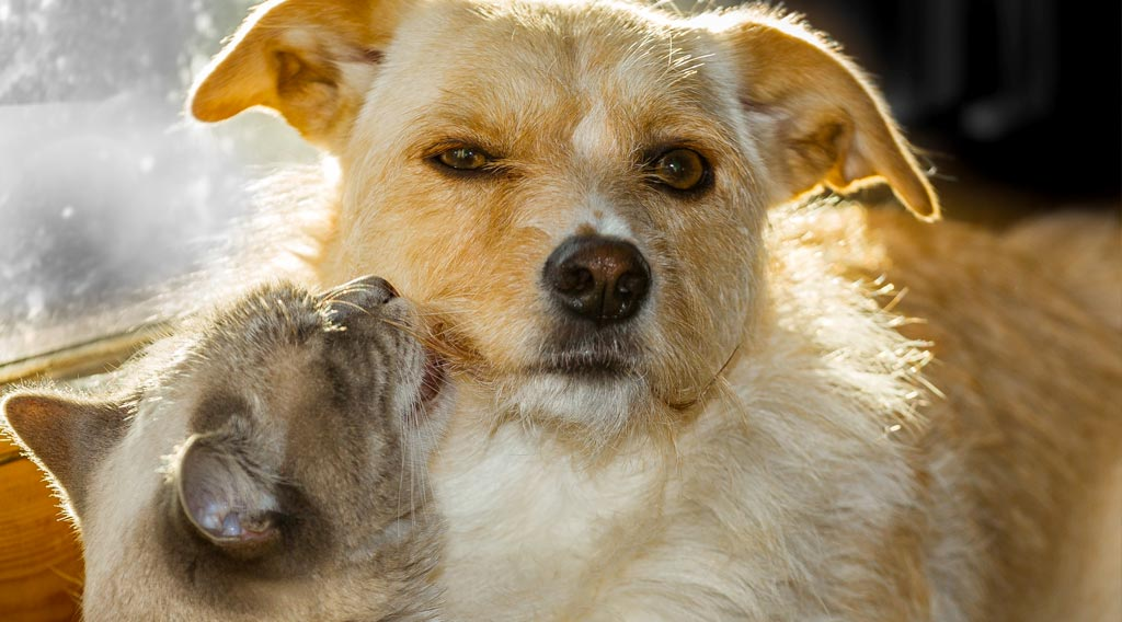 Cat looking up at reclining dog's face