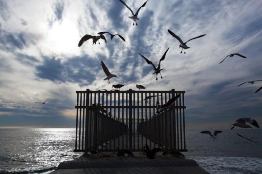 Birds flying near a pier, Dockweiler Beach State Park