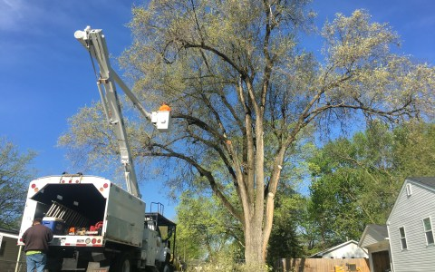 Tree Removal Springfield IL 1 | Brown Storm Service