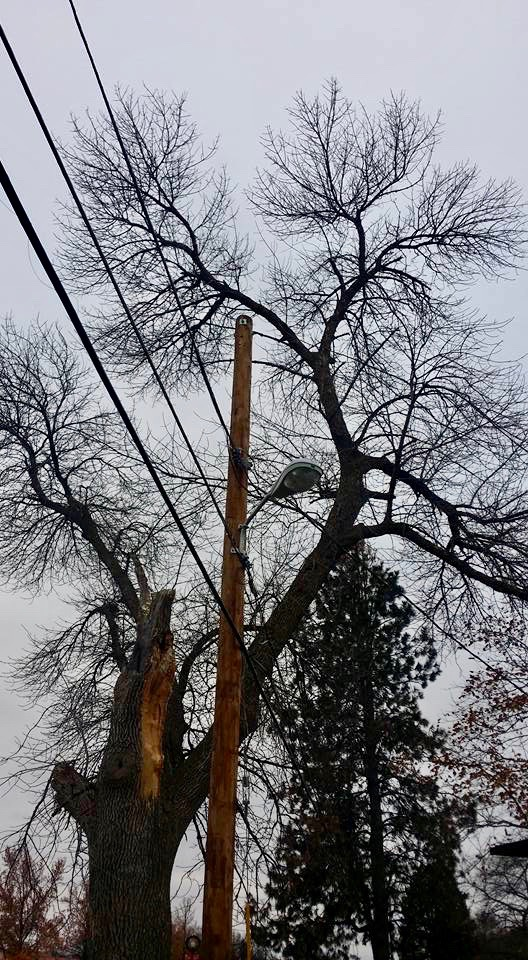 Tree Trimming Springfield IL 2 | Brown Storm Service
