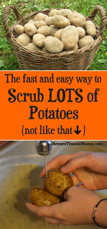 How To Scrub Potatoes : scrub, potatoes, Potatoes, Brown, Thumb, Mama®