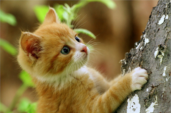 35 Adorable Funny Cats Pictures Browse Ideas