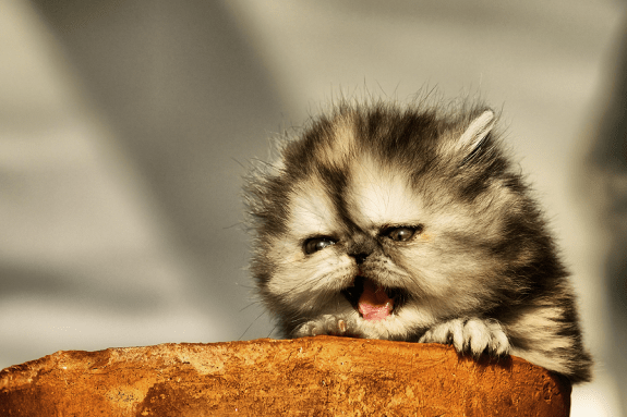 naughty cats photos