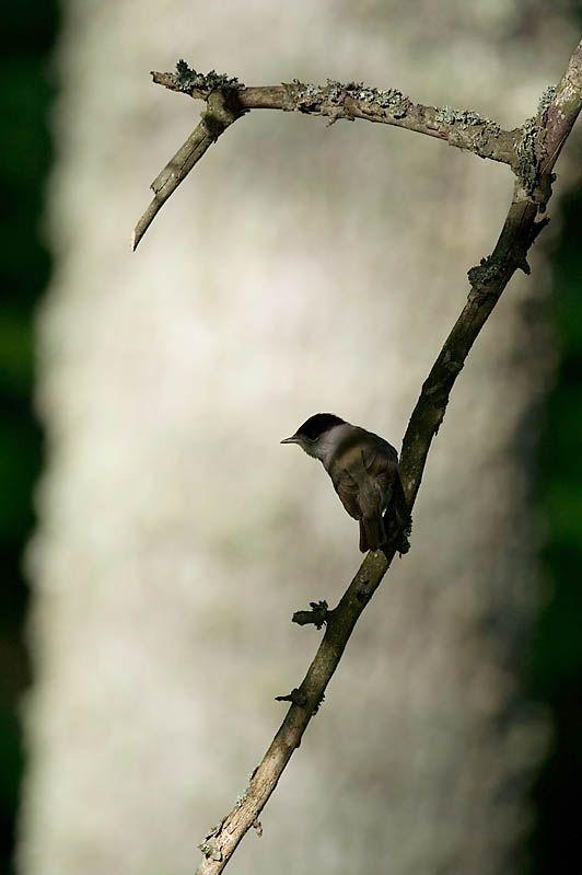 bird photos