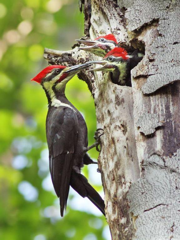 photos of birds