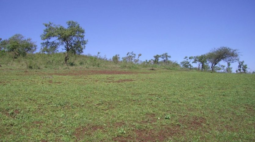 5 Acres For Sale In Kisongo-Arusha Tanzania2