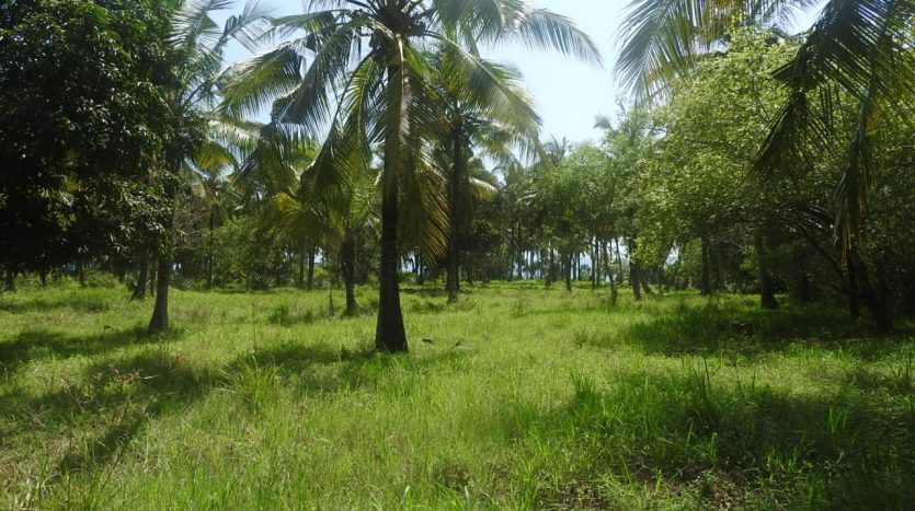 Plot For Sale at Choba Cliff Front Tanga