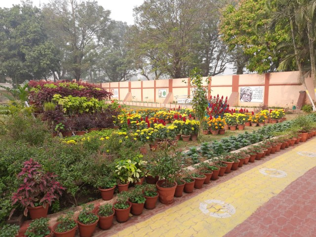 School Garden Dec (3)