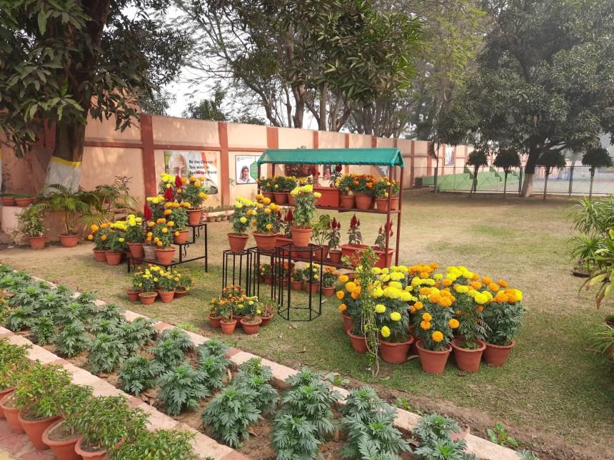 School Garden Dec (4)