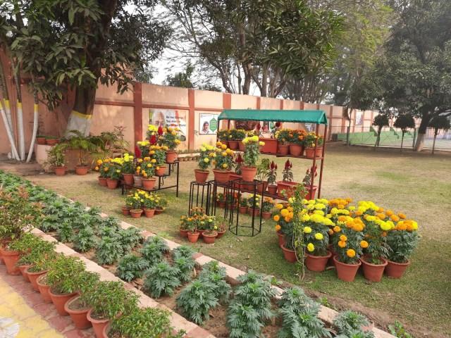 School Garden Dec (5)