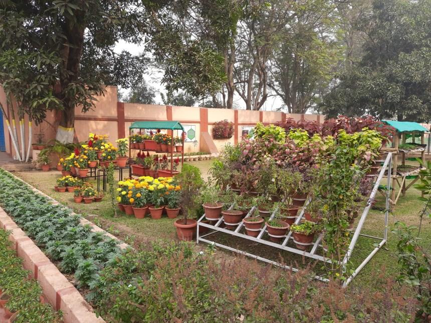 School Garden Dec (6)