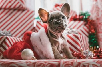 dog and presents