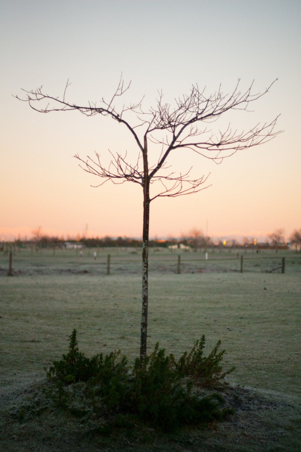 tree at dawn sunrise frosty morning