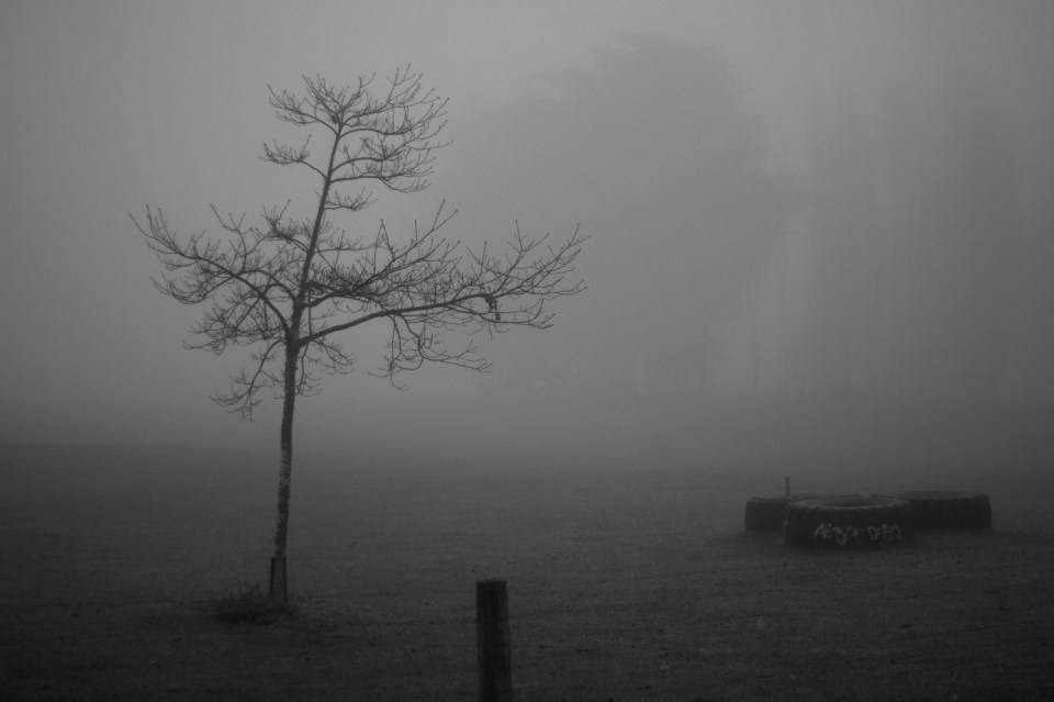 bare tree in the foreground with the outlines of larger trees barely visible through fog
