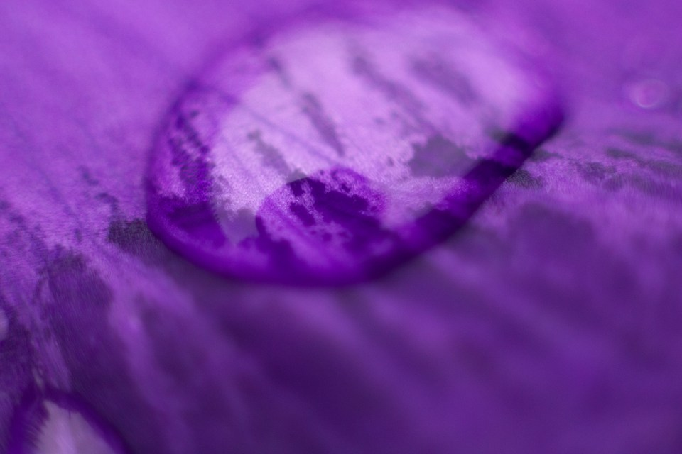 close up of a raindrop on a purple iris