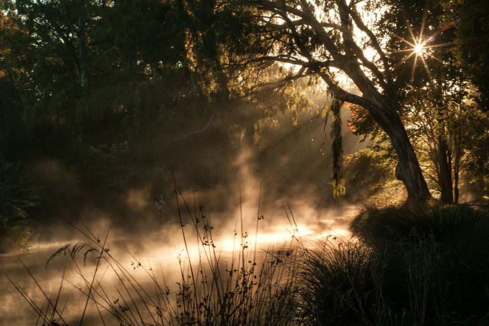 fog on river with rays from the sun beaming through trees