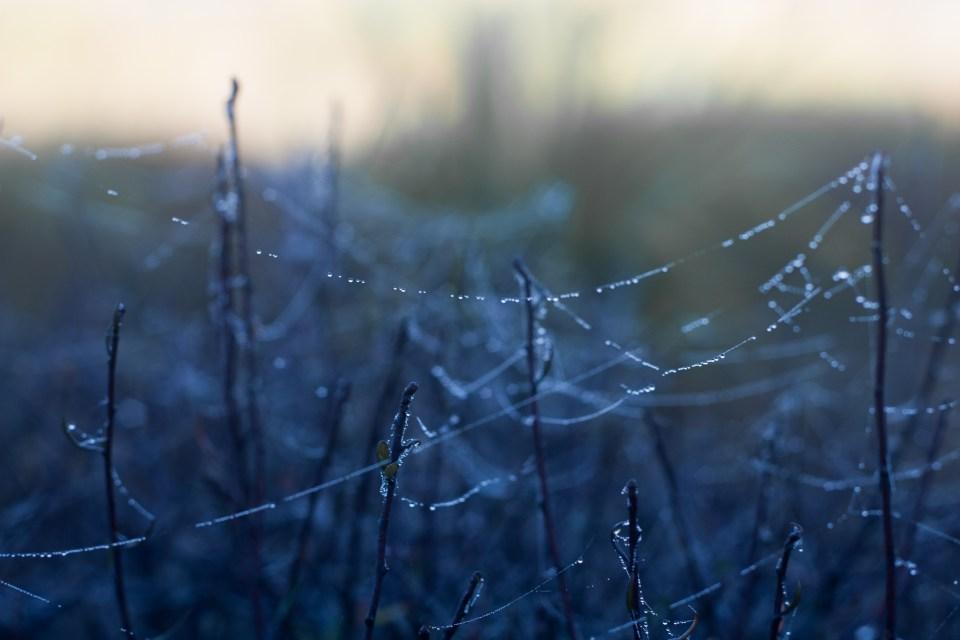 dew on spiderwebs