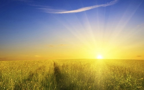 The Sun is a frequent symbol of processed food manufacturers trying to elevate the benefits of their products