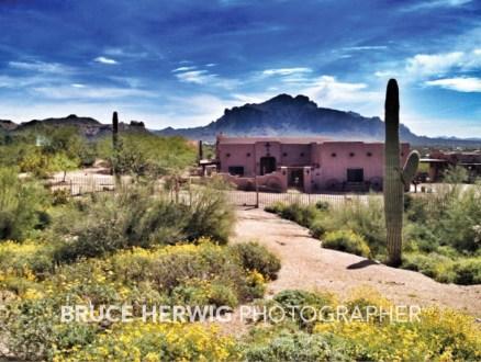 Arizona Desertscape