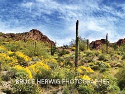 Arizona Desertscape4