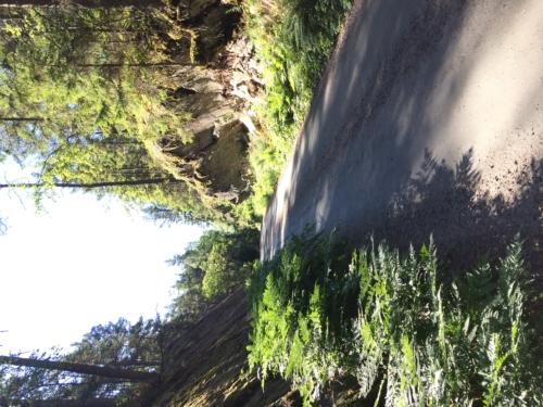 Park road through rift valley.