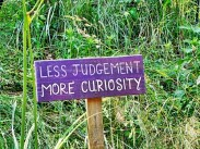 curiosity less judgement