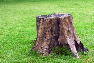 prune stump