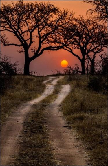 field dirt road sunset