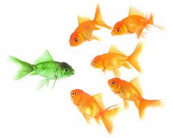 tough-choice-shopping-fish-decisions-life