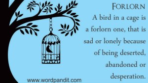 forlorn bird in a cage squeeze