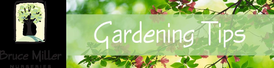 Bruce Miller Nursery Gardening Tips
