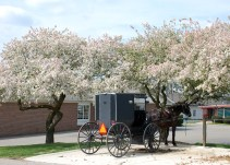 blossomsbybrucestambaugh