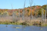 View in fall along the Holmes County Trail by Bruce Stambaugh