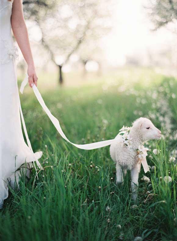 Bruid met lammetje